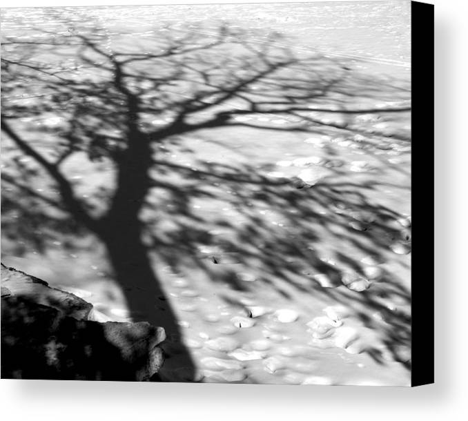 Shadow Canvas Print featuring the photograph Shadow Tree Herrick Lake Naperville Illinois by Michael Bessler