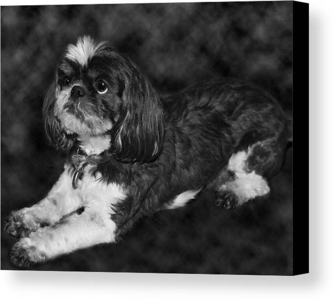 3scape Canvas Print featuring the painting Shih Tzu by Adam Romanowicz
