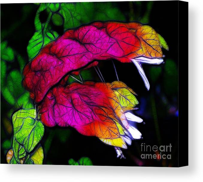 Pink Canvas Print featuring the photograph Shrimp Plant by Judi Bagwell