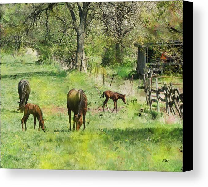Spring Colts Canvas Print featuring the digital art Spring Colts by John Beck
