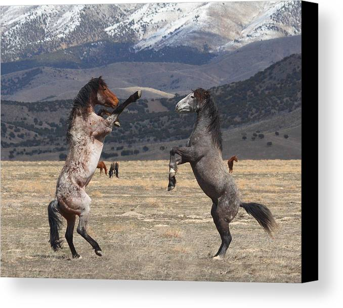 Equine Canvas Print featuring the photograph Standing Tall by Gene Praag