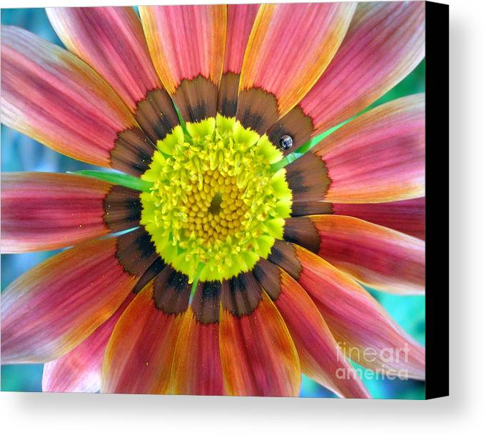Photography Canvas Print featuring the photograph Sunburst by Heather S Huston