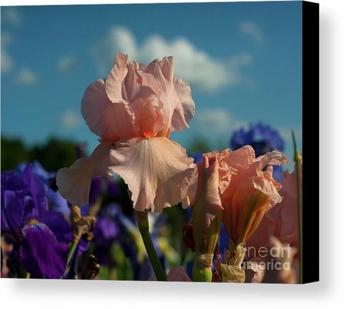 Landscape Canvas Print featuring the photograph Sunshine Dance by Jalene Januze