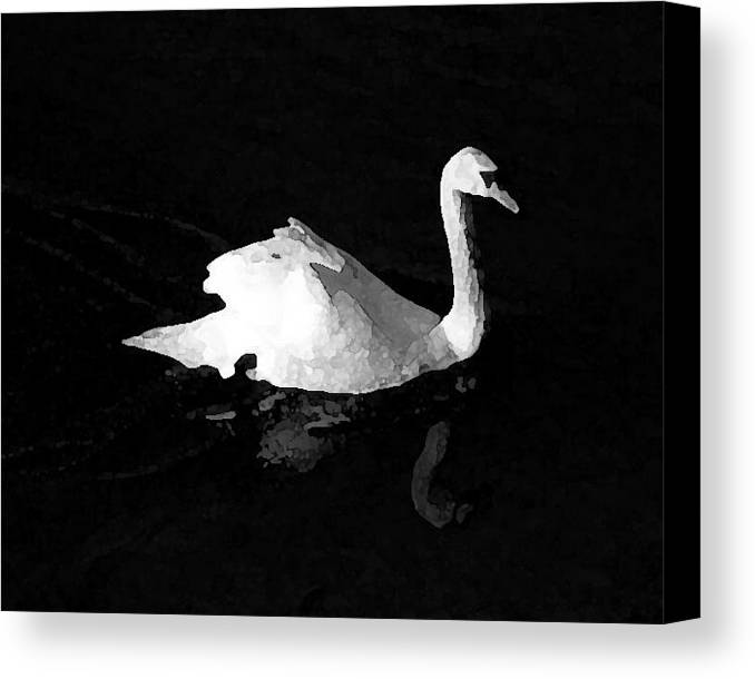 Swan Canvas Print featuring the photograph Swan In Blackwater by John Bradburn