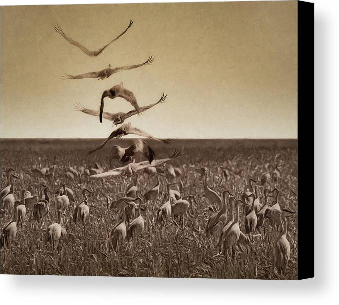 Gathering Canvas Print featuring the photograph The Gathering - Sandhill Cranes by Nikolyn McDonald