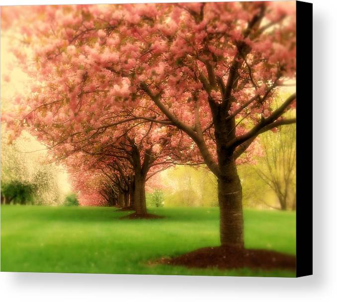 Cherry Blossom Trees Canvas Print featuring the photograph Trees In A Row by Angie Tirado