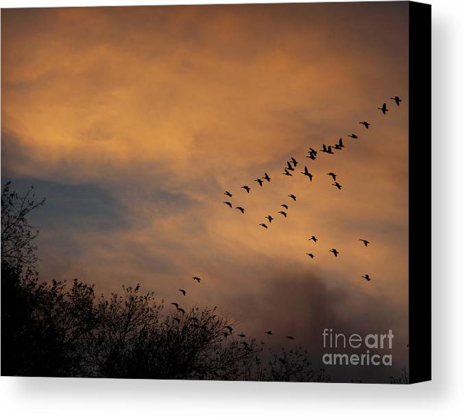 V Formation At Sunset Canvas Print featuring the photograph V Formation At Sunset by Kathy M Krause