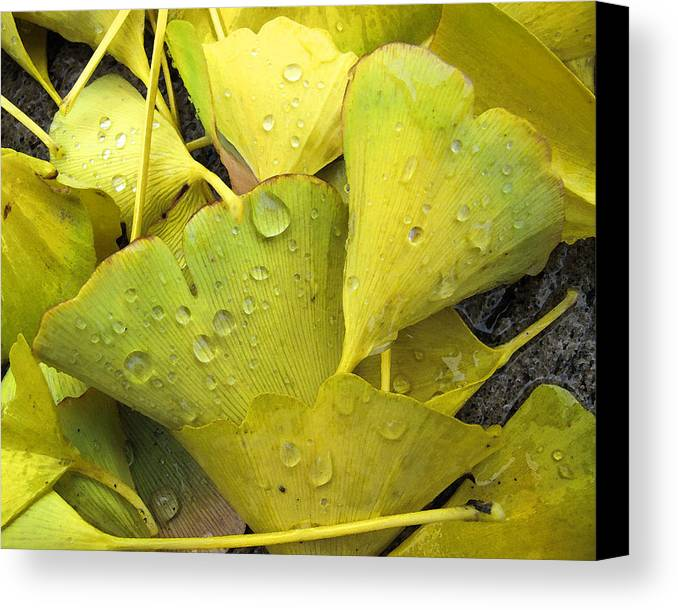 Leaves Canvas Print featuring the photograph Wet Yellow Leaves 2 Wc by Lyle Crump