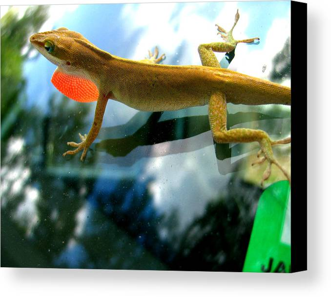 Lizard Canvas Print featuring the photograph Windshield Walker by Lindsey Orlando
