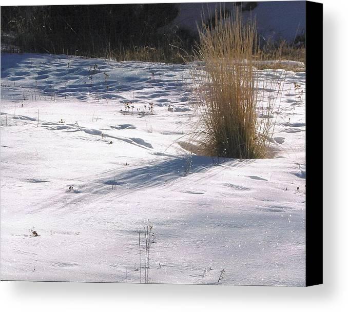 Landscape Canvas Print featuring the photograph Winter Sparkle by Yolanda Lange