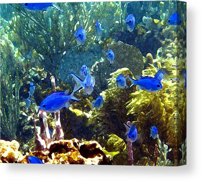 Fish Canvas Print featuring the photograph Blue Fish by Seven Seas