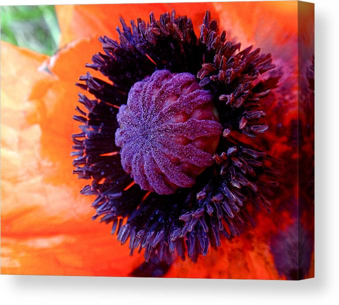 Poppy Canvas Print featuring the photograph Poppy by Rona Black