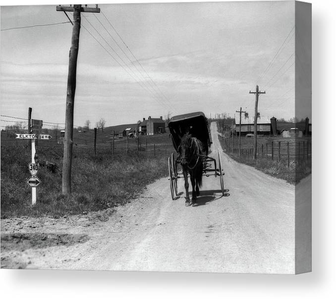 Photography Canvas Print featuring the photograph 1920s 1930s Amish Man Driving Buggy by Vintage Images