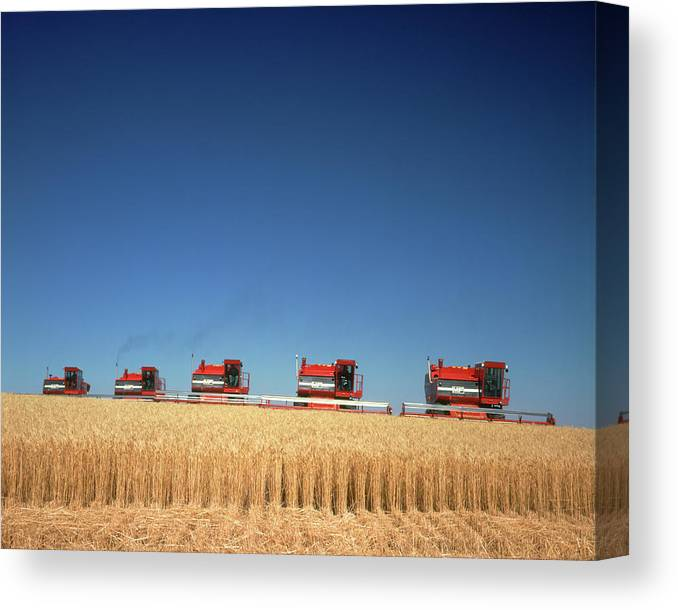 Photography Canvas Print featuring the photograph 1970s Five Massey Ferguson Combines by Vintage Images