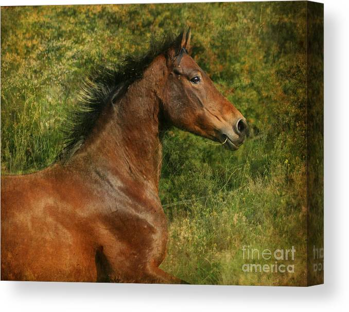 Horse Canvas Print featuring the photograph The Bay Horse by Angel Ciesniarska