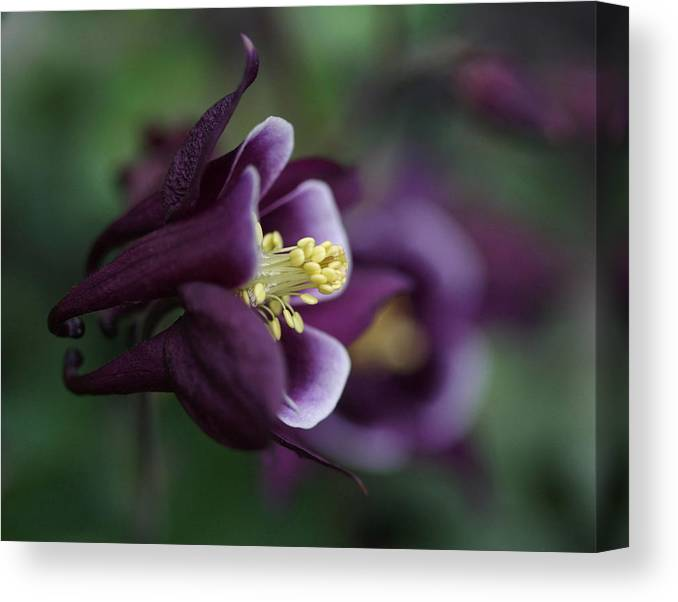 Flower Canvas Print featuring the photograph Beauty Within by Gemma June