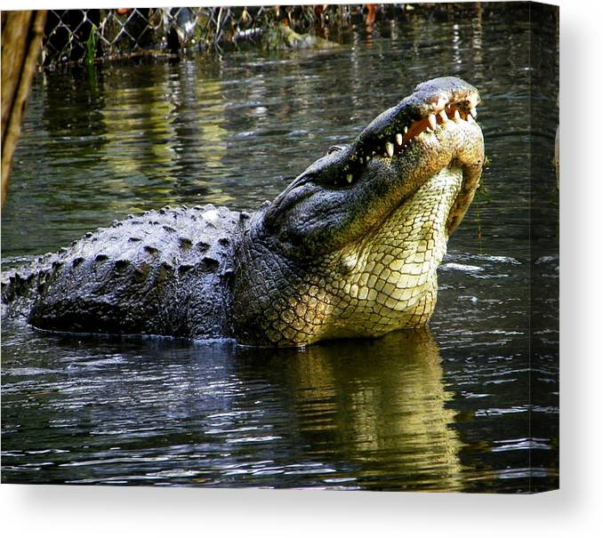 Reptile Canvas Print featuring the photograph Bellowing Bull by Judy Wanamaker