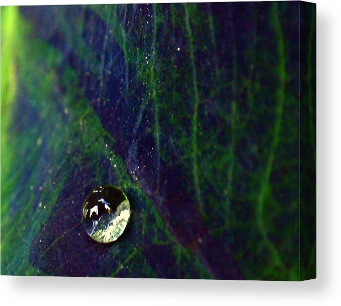 Blue Canvas Print featuring the photograph Blue Leaf by Rona Black