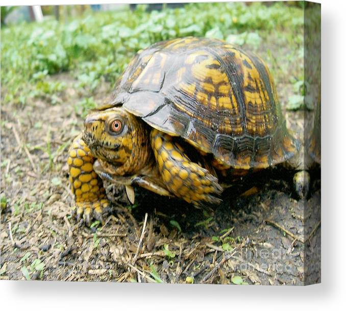 Turtle Canvas Print featuring the photograph In A Minute by Richard Brooks