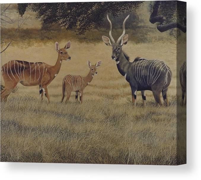 Lesser Kudu Canvas Print featuring the painting Lesser Kudu by Alan Suliber