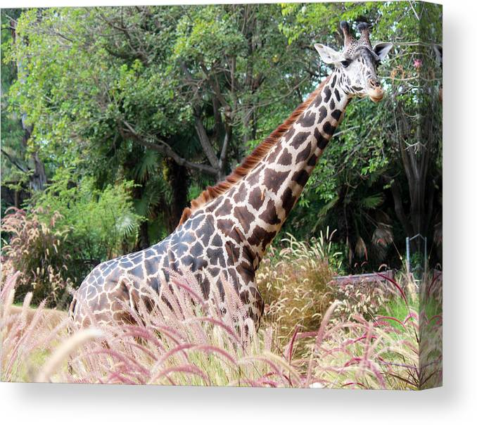 Giraffe Canvas Print featuring the photograph Morning Walk by Cheryl Del Toro