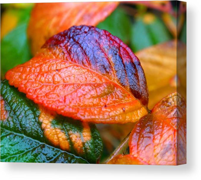 Leaf Canvas Print featuring the photograph Rainy Day Leaves by Rona Black