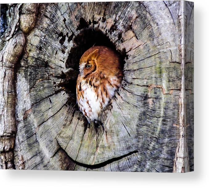 Screech Canvas Print featuring the photograph Screech Owl 02 by Terry Shoemaker