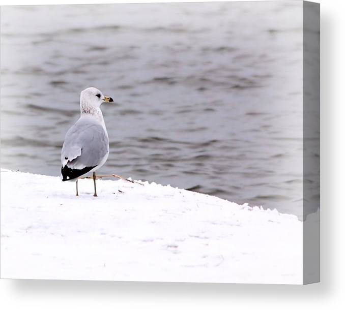 Seagull Canvas Print featuring the photograph Seagull At The Lake In Winter by Elizabeth Budd