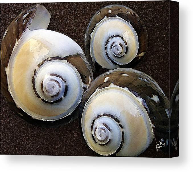 Seashell Canvas Print featuring the photograph Seashells Spectacular No 23 by Ben and Raisa Gertsberg