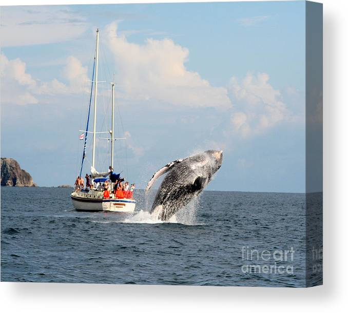 Whale Canvas Print featuring the photograph Show Off by Michelle Tinger