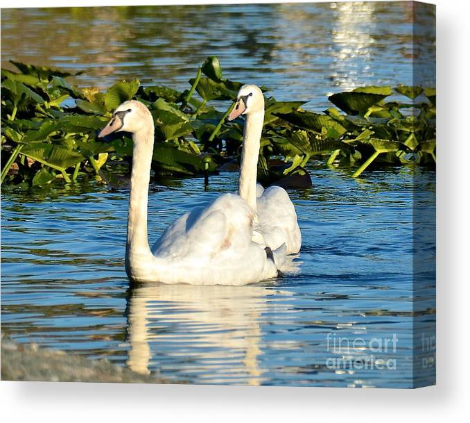 Swan Canvas Print featuring the photograph Siblings by Carol Bradley