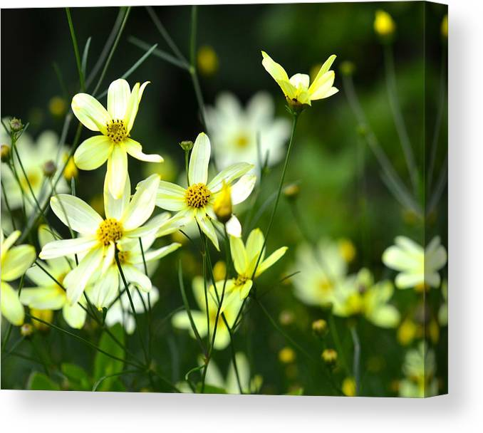 Dainty Canvas Print featuring the photograph Summer Flowers by Corinne Rhode