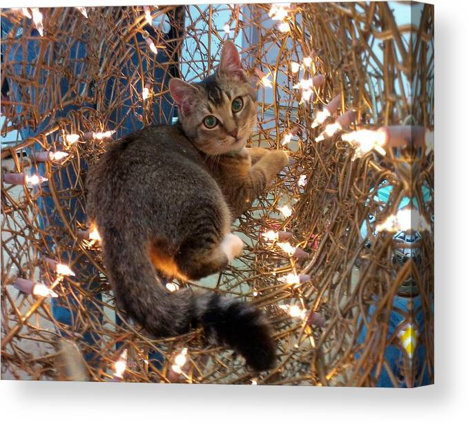 Cat Canvas Print featuring the photograph Taco by Brenda Stevens Fanning