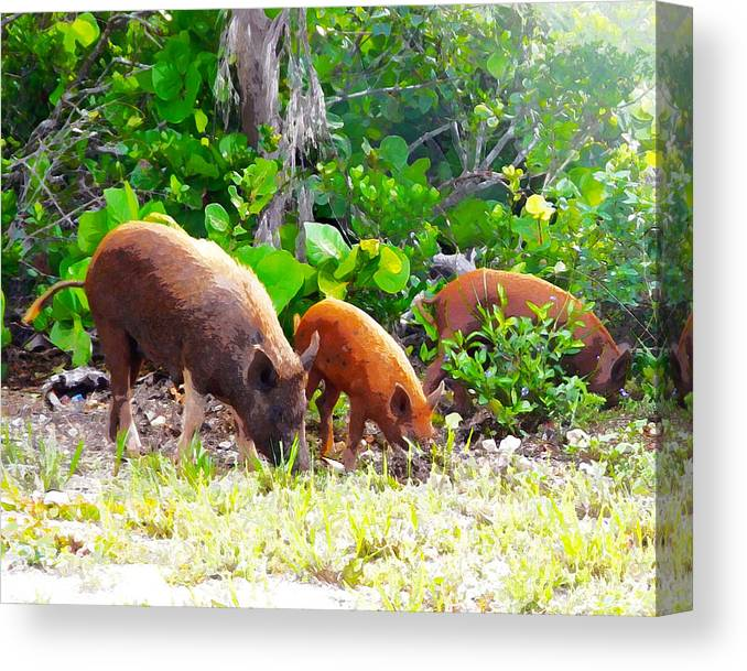 Pigs Canvas Print featuring the photograph Three Pigs by Seven Seas