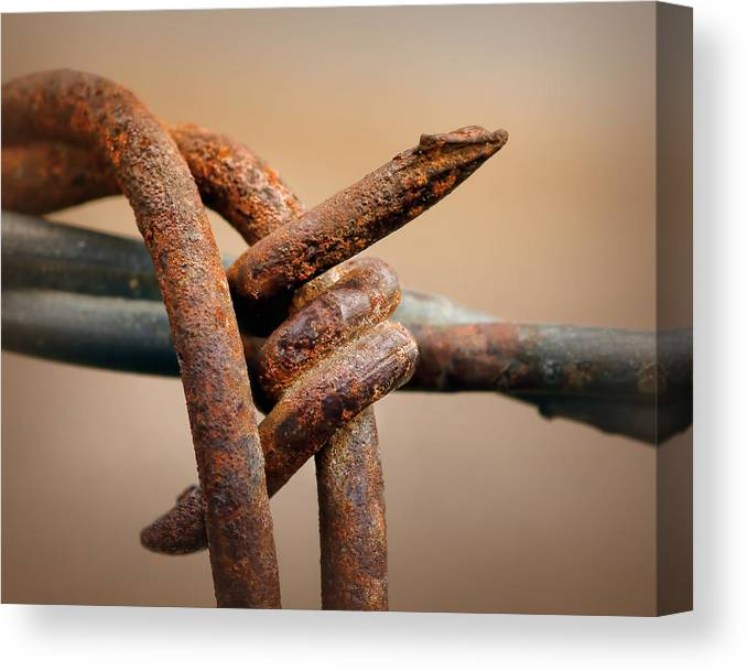 Barb Canvas Print featuring the photograph To The Point by Nikolyn McDonald