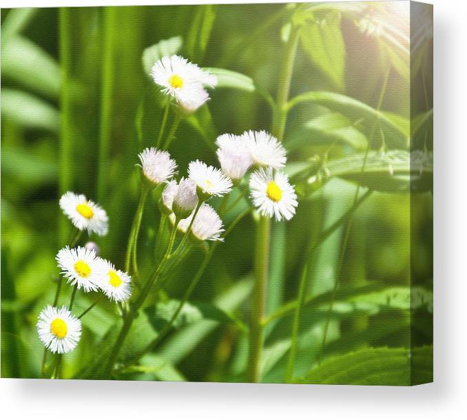 Floral Canvas Print featuring the photograph Wildflower by Kellie Prowse