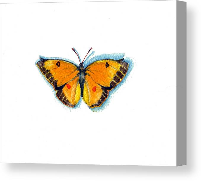 Moths Canvas Print featuring the painting Yellow Sulphur by Katherine Miller