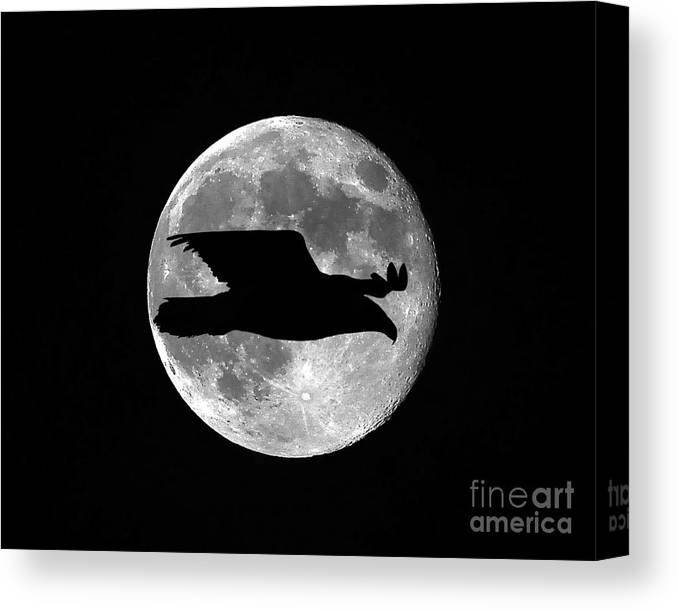 Eagle Canvas Print featuring the photograph Bald Eagle Moon by Al Powell Photography USA