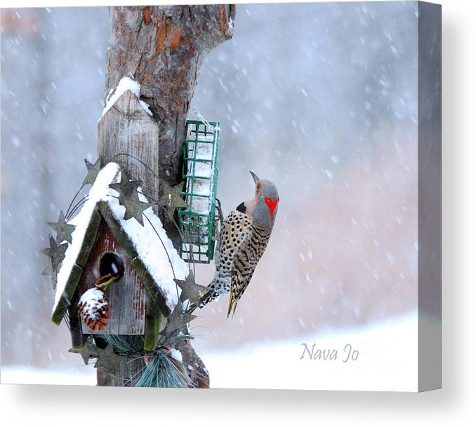 Nava Jo Thompson Canvas Print featuring the photograph Flicker Woodpecker In Winter by Nava Thompson