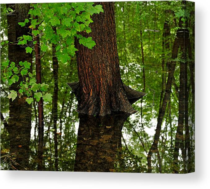 Maple Tree Canvas Print featuring the photograph Maple In The Water by Dennis Clark