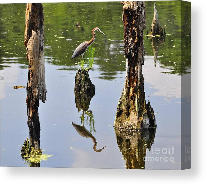 Heron Canvas Print featuring the photograph Tricolored Reflection by Al Powell Photography USA