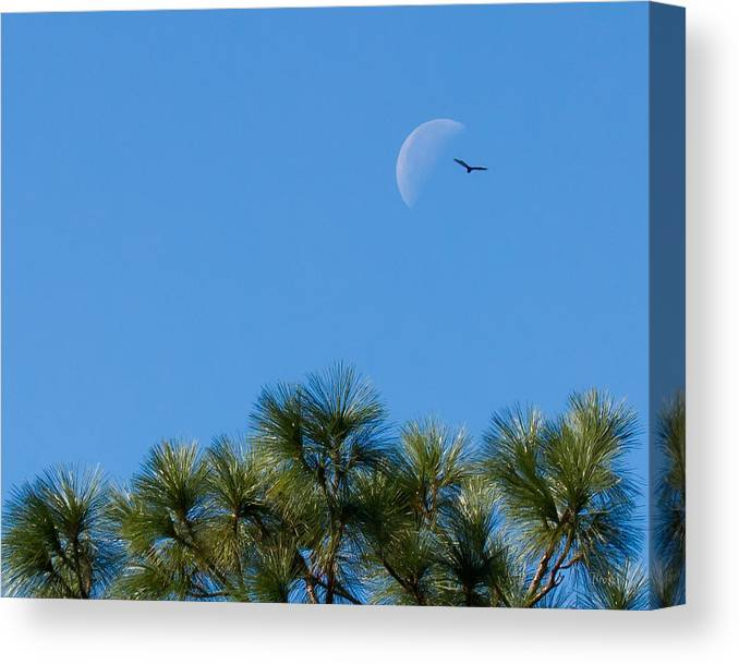4486 Canvas Print featuring the photograph Wings Over Moon by Marx Broszio