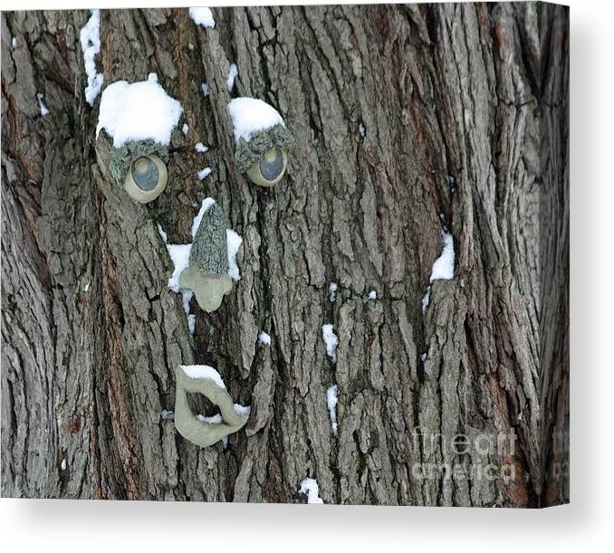 Tree Canvas Print featuring the photograph Winter Weary by Living Color Photography Lorraine Lynch