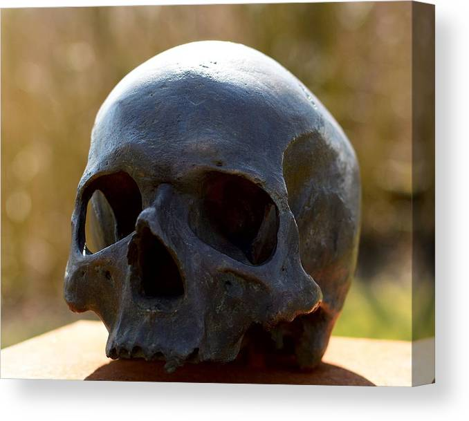 Skull Canvas Print featuring the photograph Skull by FL collection