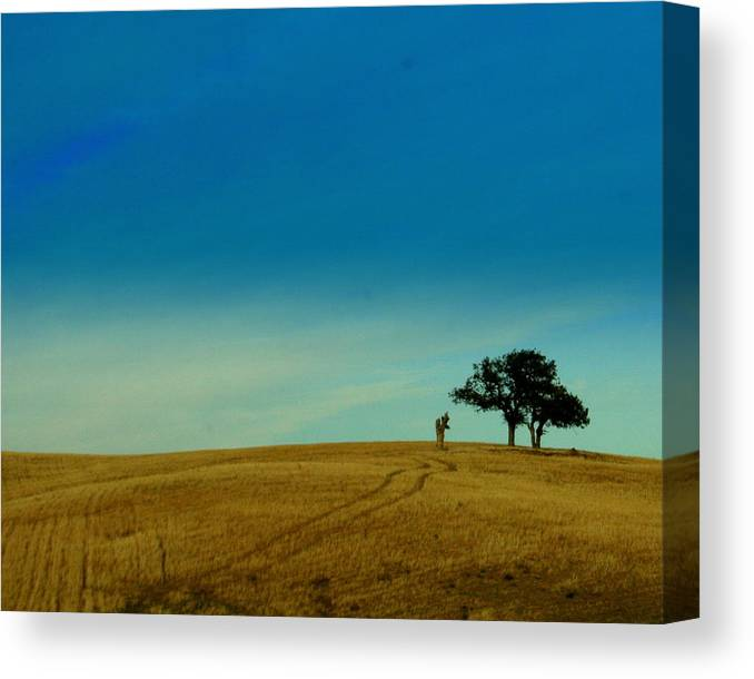 Tree Canvas Print featuring the photograph Almost Home by Kerry Reed