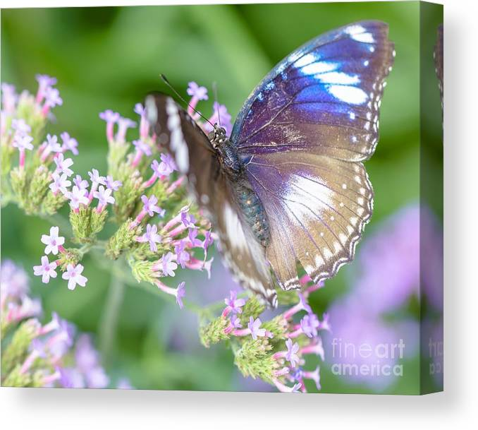 Botanic Garden Canvas Print featuring the photograph Butterfly Garden by Janice Noto