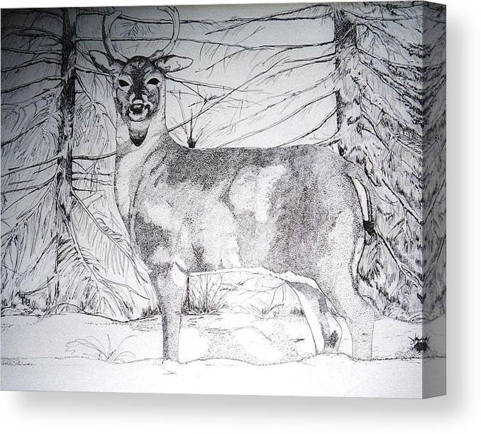 Whitetail Canvas Print featuring the drawing Deep Snow by Debra Sandstrom