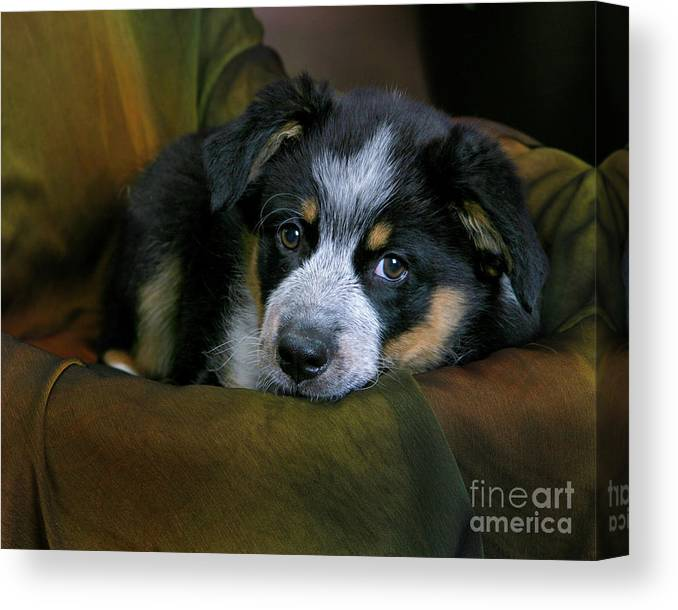 Animal Canvas Print featuring the photograph Dog Face by Crystal Garner