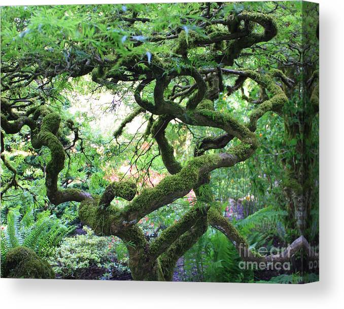 Crooked Tree Canvas Print featuring the photograph Every Which Way by Carol Groenen