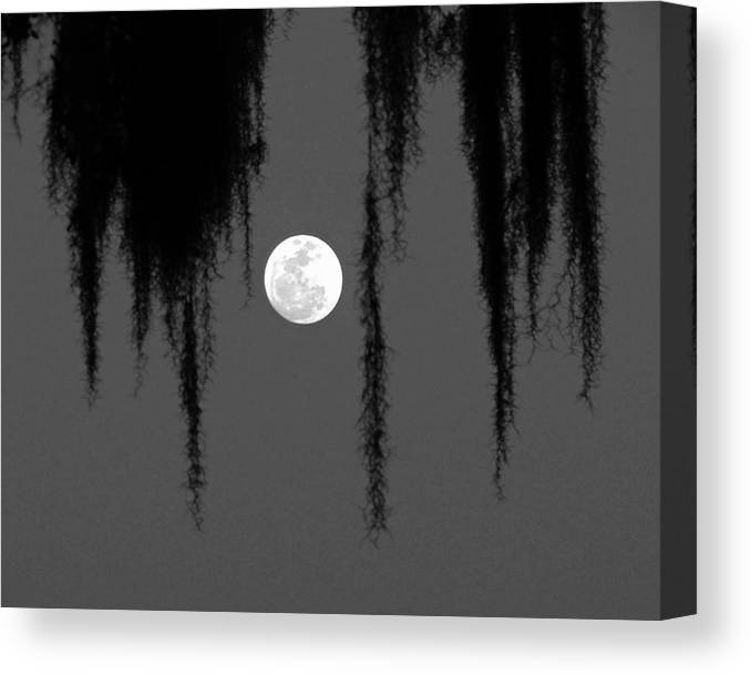 Nature Canvas Print featuring the photograph Florida Moon by Peg Urban